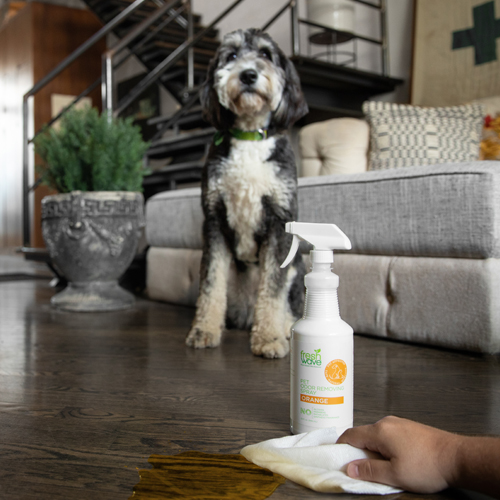 Fresh Wave Odor Removing Orange Pet Spray Wiping up Dog Pee, While Bottle is Sitting on Floor Next to Dog